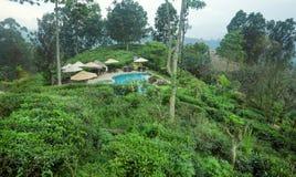 Härlig hotellsimbassäng som omges av skogen och kolonier för grönt te Arkivfoton