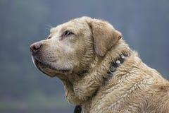 härlig hund Fotografering för Bildbyråer