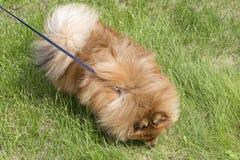 Härlig hund på grönt gräs Royaltyfri Bild
