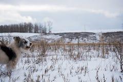 Härlig hund på vinterfältet Arkivbild