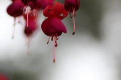 Härlig indisk blomma Royaltyfria Foton