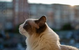 Härlig inhemsk katt som sitter i bakgrunden av solnedgången arkivbilder