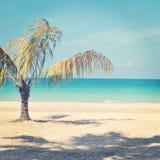 Härlig instagram av den ensamma palmträdet på en tropisk strand Royaltyfri Fotografi