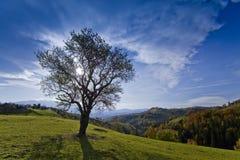 härlig isolerad landskaptree för höst Royaltyfri Fotografi