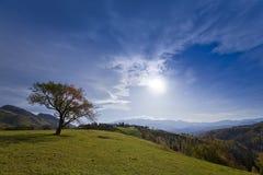 härlig isolerad landskaptree för höst Royaltyfri Foto