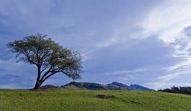 härlig isolerad landskaptree för höst Arkivfoton