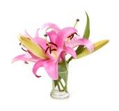 härlig isolerad lilja Fotografering för Bildbyråer