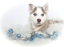 Härlig julHuskyvalp Royaltyfri Fotografi
