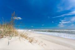 Härlig jungfrulig kust med vita sand och växter royaltyfri bild