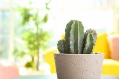Härlig kaktus i blomkruka på tabellen arkivbild
