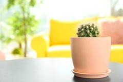 Härlig kaktus i blomkruka på tabellen fotografering för bildbyråer