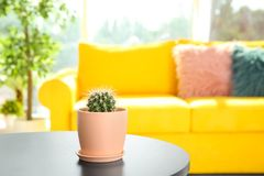 Härlig kaktus i blomkruka på tabellen arkivfoto