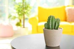 Härlig kaktus i blomkruka på tabellen arkivfoton