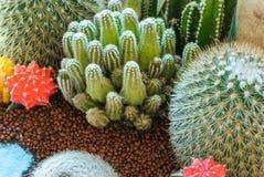 Härlig kaktusbild Royaltyfria Bilder