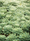 Härlig kaktusnaturbakgrund royaltyfri foto