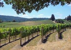 härlig Kalifornien nordlig vingård Fotografering för Bildbyråer