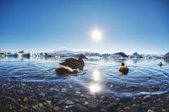 Härlig kall landskapbild av den icelandic glaciärlagunfjärden, Arkivbilder
