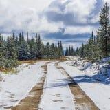 Härlig kanadensisk logga väg i vinter royaltyfri bild