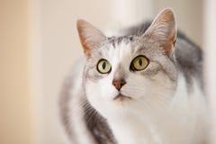 härlig katt Royaltyfria Foton