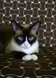 härlig katt 2 arkivbilder
