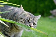 Härlig katt Arkivfoto