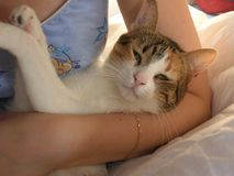 härlig katt Fotografering för Bildbyråer