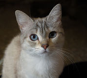 härlig katt Arkivfoton