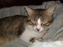 härlig katt arkivbild