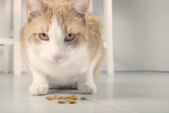 Härlig katt bredvid matning Arkivbilder