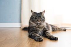 Härlig katt hemma Fotografering för Bildbyråer