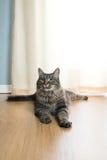 Härlig katt hemma Royaltyfria Foton