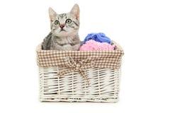 Härlig katt i korgen som isoleras på vit bakgrund Royaltyfri Bild