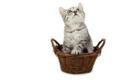 Härlig katt i korgen som isoleras på vit bakgrund Royaltyfri Foto