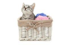 Härlig katt i korgen som isoleras på vit bakgrund Royaltyfria Foton