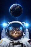 Härlig katt i yttre rymd Arkivbild