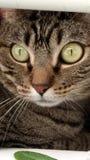 Härlig katt med djup blick royaltyfri bild