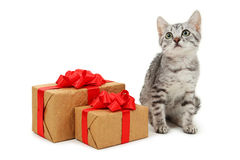 Härlig katt med gåvaasken som isoleras på en vit Arkivfoto