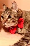 Härlig katt med röd bowtie Royaltyfri Bild