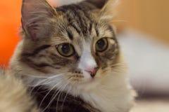 Härlig katt med uttrycksfulla ögon Royaltyfri Bild
