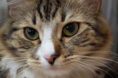 Härlig katt med uttrycksfulla ögon Arkivbilder