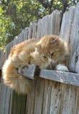 Härlig katt på ett staket Arkivbilder