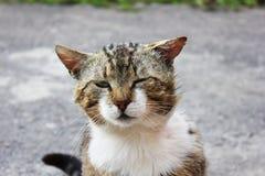 Härlig katt på gatan arkivfoto