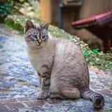 Härlig katt på gatan royaltyfri foto