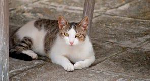 Härlig katt på trottoar Royaltyfria Bilder
