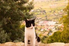 Härlig katt på väggen Fotografering för Bildbyråer