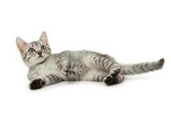 Härlig katt som isoleras på vit bakgrund Arkivbild