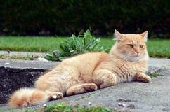 Härlig katt som kopplar av på trädgården Arkivfoto