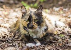 Härlig katt som ligger i de gamla höstsidorna Royaltyfri Bild