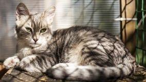 Härlig katt som ligger på en gammal träbänk i solskenet royaltyfria foton