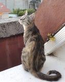 Härlig katt som ser se himlen arkivbild
